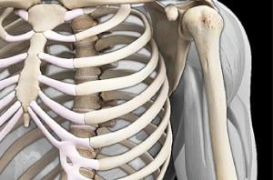 3D bones
